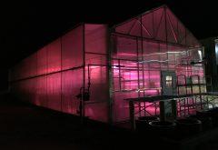 Jimmy O'Hara_Greenhouse-at night