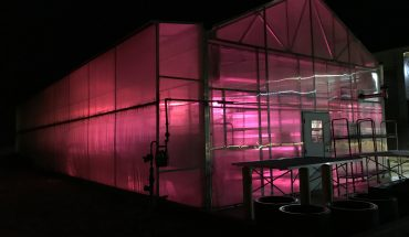 Jimmy O'Hara_Greenhouse-at night