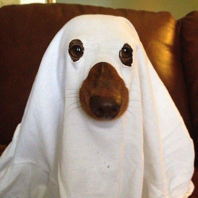 Ghost popsugar & Last-minute DIY Halloween costumes | Fourth Estate