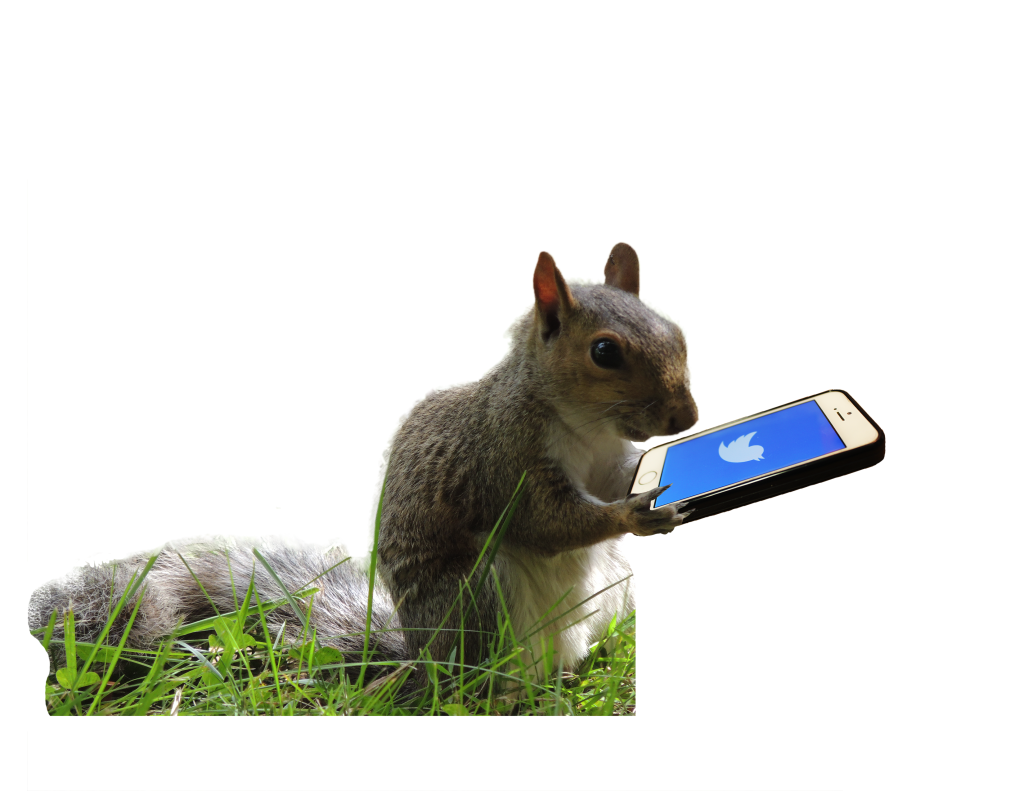 IVESTATE_lifestyle_squirrel