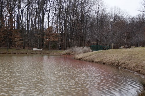 The Fairfax campus is its own watershed. This means all the rainfall that lands on campus drains to Mason Pond and other nearby streams. (Amy Rose/Fourth Estate)