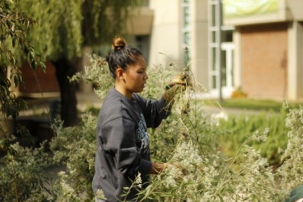 Meri Isham removes dead plant material from Mason LIFE's garden in her LIFE A100 Horticulture class. (Claire Cecil/Fourth Estate)